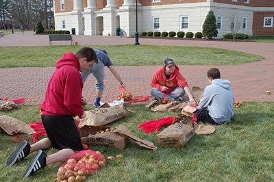 Students bagging potatoes.